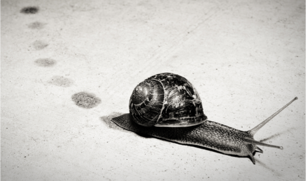 beginner-photography-tips-book-hacking-photography-snail-photo-mike-newton