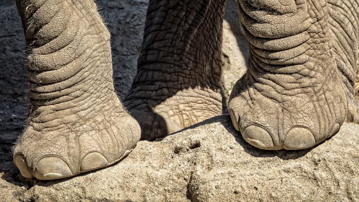 Elephant-0002