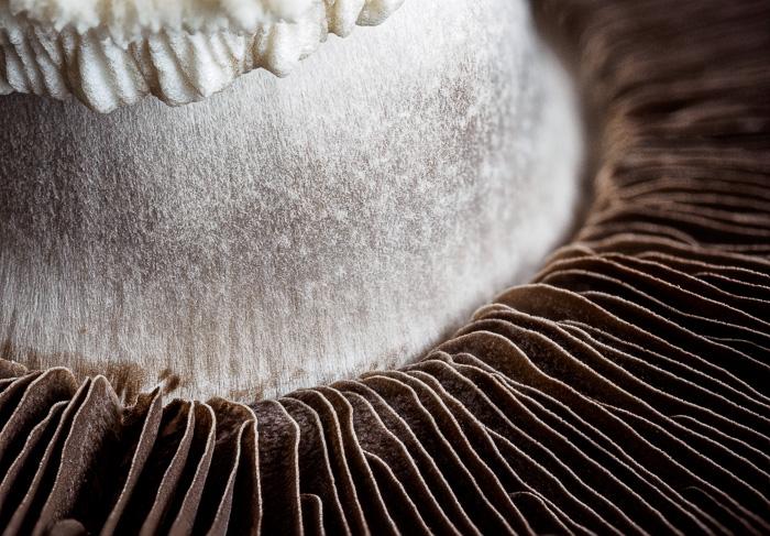 Mushroom_stack-4