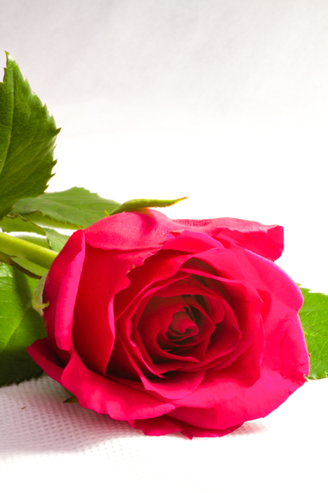 Rose Product