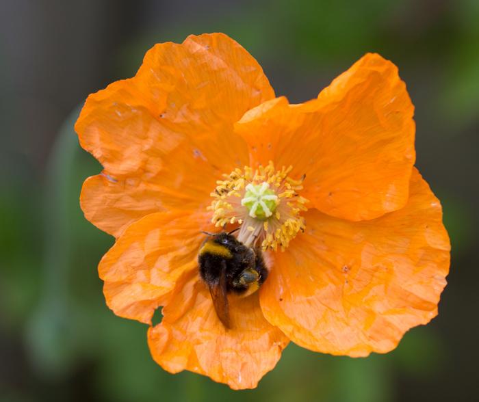 Wide aperture bee-2
