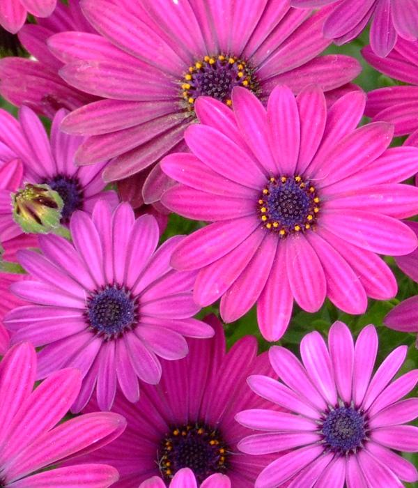 repeatflower